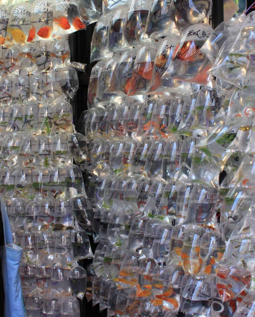 Fish aquarium market in delhi - Fish For Sale Gold Fish Market